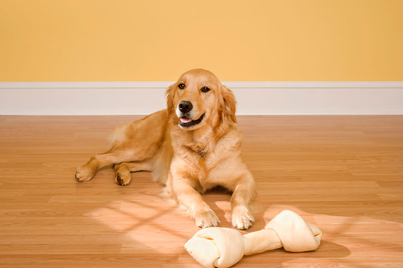 Hardwood Floors and Pets, How to Deal with Stains & Scratches